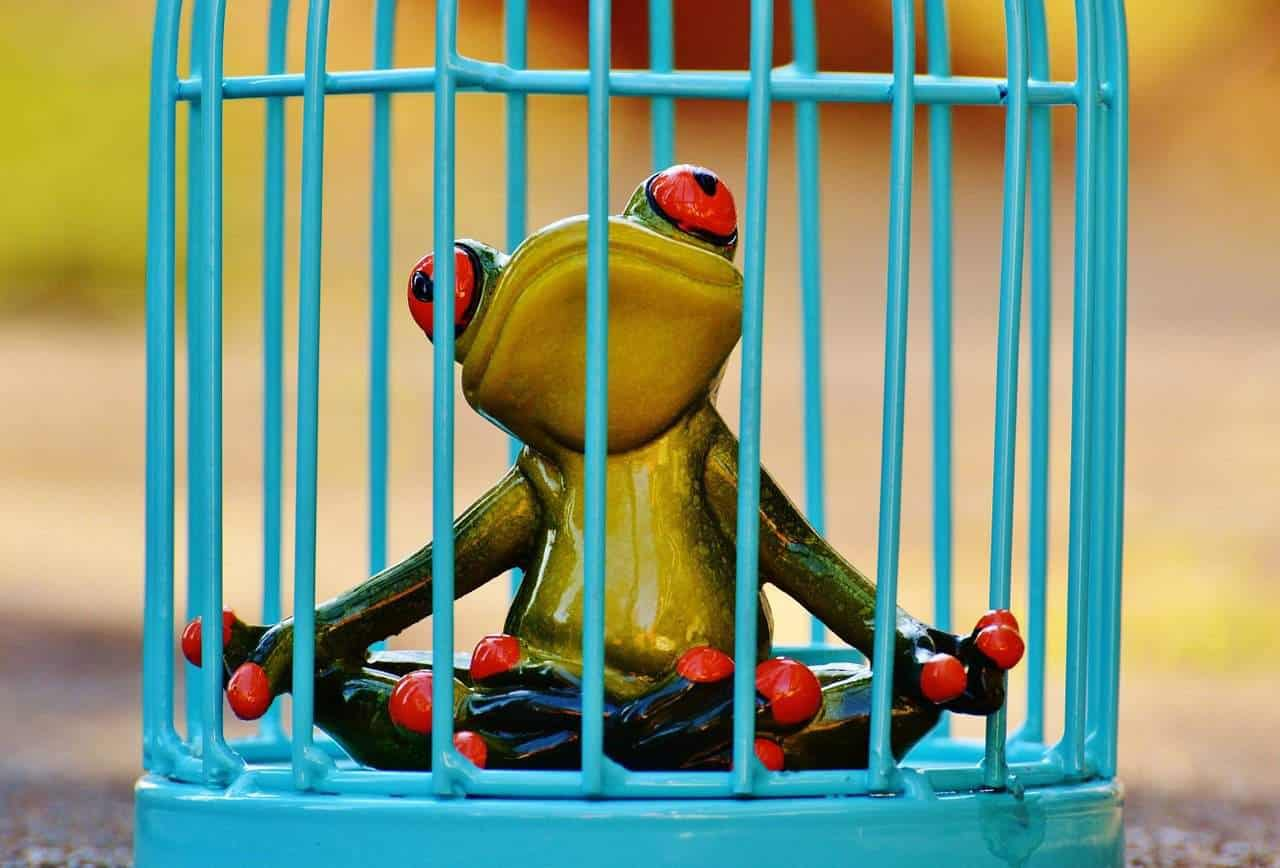 Rattling Cages And 3 Keys To Escape Your Limitations